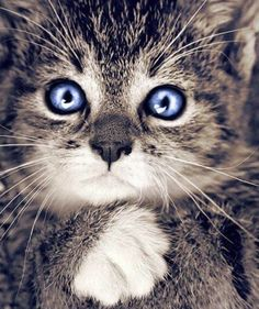 Beautiful!  I LOVE ALL ANIMALS, I CURRENTLY HAVE A CAT WHO IS THE LOVE OF MY LIFE RIGHT NOW, HOPING FOR MORE