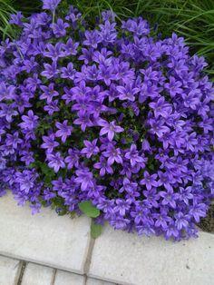Florile mele
