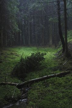 In the simulation, there are three clearings in the woods located north of the city.