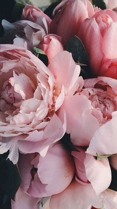 Flowers peonies garden inspiration 32 Ideas – Famous Last Words Bunch Of Flowers, Pretty Flowers, Pink Flowers, Cut Flowers, Dried Flowers, Fresh Flowers, Pink Roses, Wallpaper Flower, Pink Wallpaper