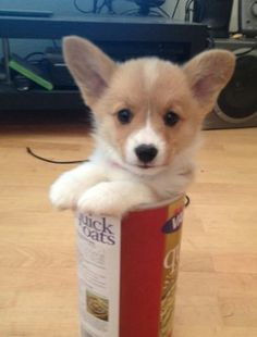 It wasn't me.                                                         - Corgi