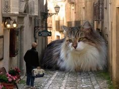 Weird & Funny Pics ~ giant cat in all, filling up street Crazy Cat Lady, Crazy Cats, Big Cats, Cool Cats, Cats And Kittens, Huge Cat, Cats Bus, Animals And Pets, Funny Animals