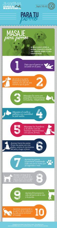 Darle a tu perro un buen masaje ayuda a mejorar sus condiciones de estrés y ansiedad. Además es una actividad que los va a unir.