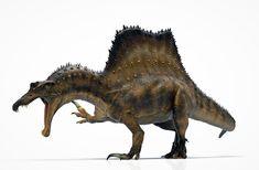 Prehistoric World, Prehistoric Creatures, Reptiles, Dinosaurs Live, Dinosaur Art, Dinosaur Crafts, Spinosaurus, Jurassic Park World, Extinct Animals