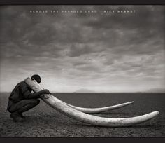 Across the Ravaged Land by Nick Brandt,http://www.amazon.com/dp/1419709453/ref=cm_sw_r_pi_dp_Quugsb1QP9ATSDQY