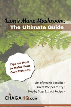 Discover everything you need to know about Lion's Mane Mushroom, including its health benefits, how to prepare it and more. Mushroom Grow Kit, Mushroom Tea, Mushroom Food, Lion's Mane Jellyfish, Dog Lion Mane, Mushroom Benefits, Cancer Fighting Foods, Mushroom Recipes, Great Recipes