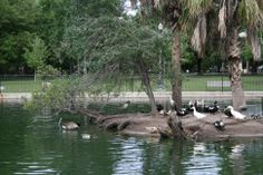 Riverside Jacksonville Florida Parks | Riverside Park Photo Gallery