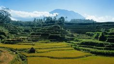 Famous Rice Terraces Bali #honeymoon