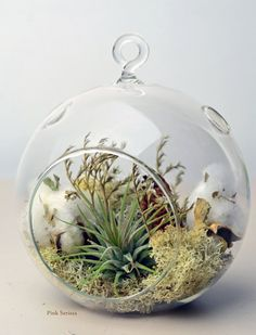 Air Plant Terrarium  Hanging Glass Orb Terrarium  by PinkSerissa