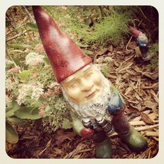 Dig It! Bring on the Gnomes
