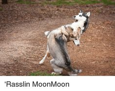 Image result for moon moon Funny Animal Pictures, Funny Animals, Moon Moon, Goats, Lol, Google Search, Image, Kids, Young Children
