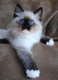 looks like kitty girl...she was a sweetheart