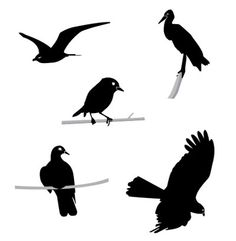 bird vector - Google Search