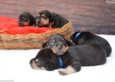 The babies, who were born just after Lilica's pregnancy photo shoot, have all found homes...