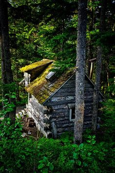 Old mossy cabin next door to Hidden Creek B&B  Hidden Creek B&B, Girdwood, Alaska.