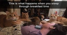 10 Chemistry Cat Memes - images/slides added under category of Popular Memes and Images Funny Cat Fails, Funny Cat Memes, Funny Quotes, Memes Humor, Funny Minion, Humor Quotes, Funny Shit, Funny Stuff, Funny Cat Photos