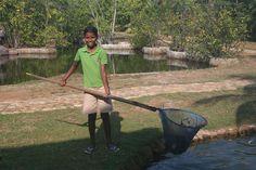 Helping to keep the fish ponds clean at Kalapuwa Sri