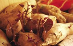 Growing Magazine - Sweet Potatoes in Colder Climates - February, 2010 - NORTH FEATURES