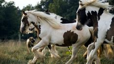 Viewing Gallery For - Pinto Horse Wallpaper Desktop. Most Beautiful Horses, All The Pretty Horses, Animals Beautiful, Cute Animals, Beautiful Creatures, Free Horses, Wild Horses, Cavalo Wallpaper, Cheval Pie