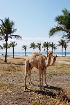 Arabian Beach Stay in Salalah, Oman