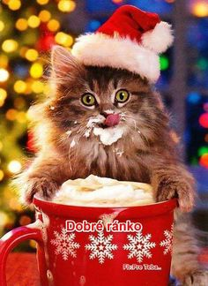 Kittens Cutest, Cute Cats, Funny Cats, Funny Animals, Christmas Eve Images, Christmas Scenes, Merry Christmas, Santa Claus Photos, Christmas Kitten