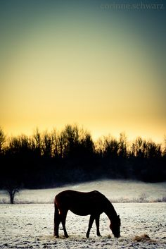 LOVE horses!!!