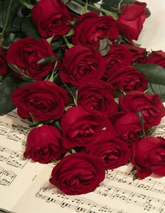 red roses...St Therese said she would pray for souls to come to God by her Little Way...with roses as a sign ..have you seen roses in your life lately???