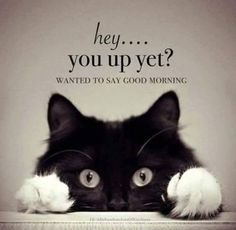 Good Morning Quotes, Funny Good Morning Wishes, Inspirational Morning Quotes With Images Good Morning Beautiful Quotes, Good Morning Quotes For Him, Morning Inspirational Quotes, Good Night Quotes, Good Morning Good Night, Good Morning Wishes, Good Morning Images, Good Morning Best Friend, Good Morning Posters