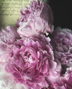 Peonies Bouquet, Peony, Pure Products, Rose, Flowers, Plants, Instagram, Pink, Peonies