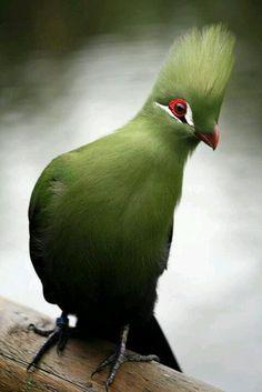 green beautiful bird