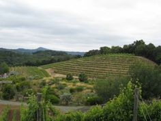 Benziger Family Vineyards, Sonoma Valley, California
