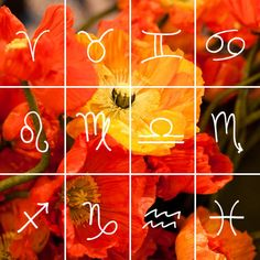 What's Your Sign? Gemini | The Tory Blog