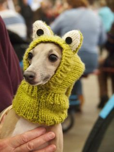 Italian greyhound wearing protective head mitt