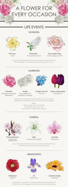 Diy wedding bouquet peonies new ideas - Modern Lilac Roses, Purple Flowers, Flower Meanings, Rose Color Meanings, Language Of Flowers, Carnations, Ranunculus, Tulips, Planting Flowers