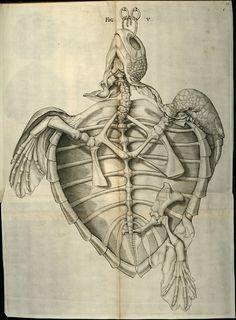 liquidnight: Daniel Schultz Illustration for the Museum Gottwaldianum, 1665 [via BibliOdyssey]
