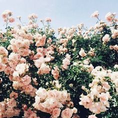 """I love flowers."" Rhys breathed out, shutting his eyes as he let the petals float lazily from his fingers. ""They remind me of home. Pretty In Pink, Wild Flowers, Beautiful Flowers, Spring Flowers, Blush Flowers, Flowers Nature, Flower Aesthetic, Pink Aesthetic, Aesthetic Indie"