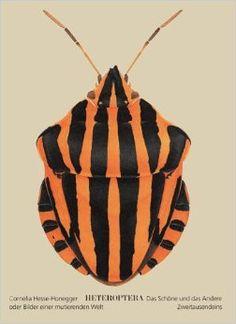 Heteroptera: Cornelia Hesse-Honegger http://butdoesitfloat.com/Morphologically-disturbed