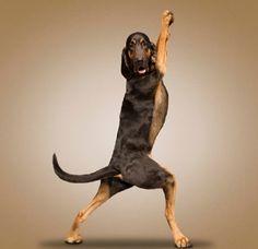 yoga-dogs-dan-borris-enpundit-9