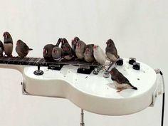 Rock 'n' Roll Birds