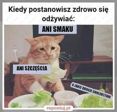 ) ) ( ( Y ) # Humor # amreading # books # wattpad Animal Memes, Funny Animals, Memes Humor, Jokes, Polish Memes, Wtf Funny, Best Memes, Really Funny, Funny Images