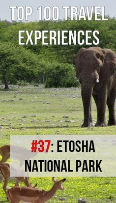 Counting down the Top 100 Travel Experiences: #37 - Etosha National Park, Namibia