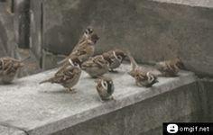 It's Okay...They're Birds - GIF