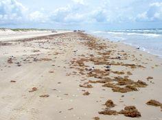 Corpus Christi Beach