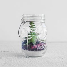 Create a lush mini-environment by making a terrarium out of our Mason Jars! #northernlightscandles #candles #masonjar #diy #homedecor #succulents #terrarium #garden #indoor #plants