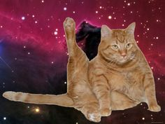 Gatos flotando en el espacio