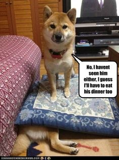 No, I havent seen him either, I guess I'll have to eat his dinner too