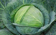 Как нужно подкармливать капусту   удобрения