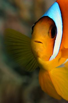 10bullets:  In Nemo's Face by Laura Storm on Flickr.
