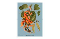 Poster ARTIS-Bibliotheek 0079– ARTIS Webshop Banners, Paper, Balcony, Banner, Posters, Bunting