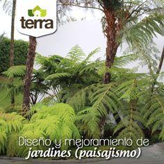 Este servicio consiste en la asesoría para el diseño y construcción de jardines nuevos, o mejoramiento de existentes. Nos encargamos, en conjunto con las necesidades y deseos del cliente, del diseño de los jardines y de la consecución del material necesario (plantas, árboles, etc.).